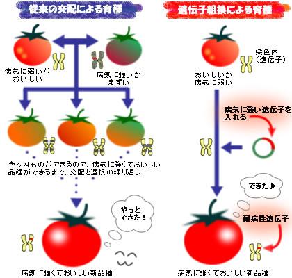 basic_abo_01